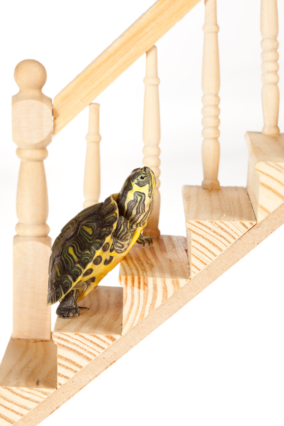 Turtle with ambition