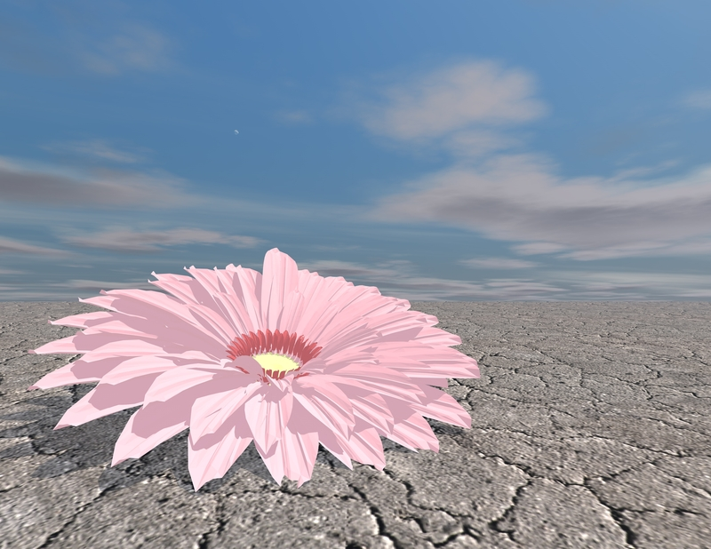 http://www.dreamstime.com/stock-photos-beautiful-flower-desert-strength-concept-stamina-abstract-image41626103